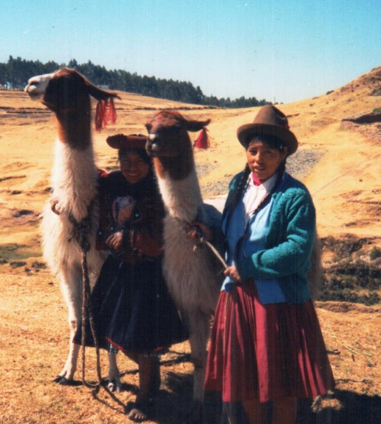 miniature llamas