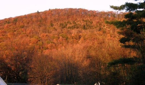 Massachusetts turned on its fall colors for me as we drove each evening ater calss in the glow of the setting sun.