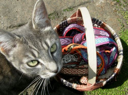 Jane makes exquisite baskets and brought along one of her creatios filled wih her Andean Pebble Weave bands. Ripples the cat had to get in on the act.