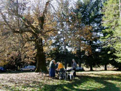Not too cold yet to be warping outdoors under the big ol' oak tree at Janet's place.