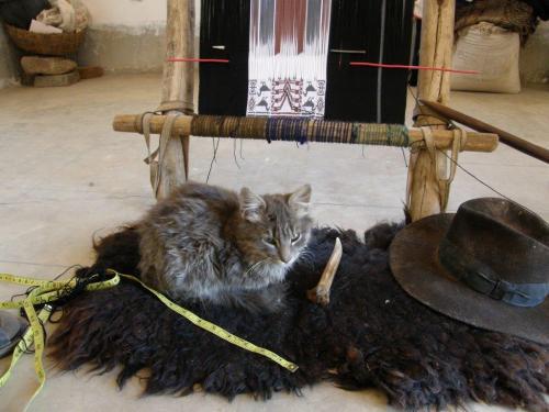 candelaria weaver's room